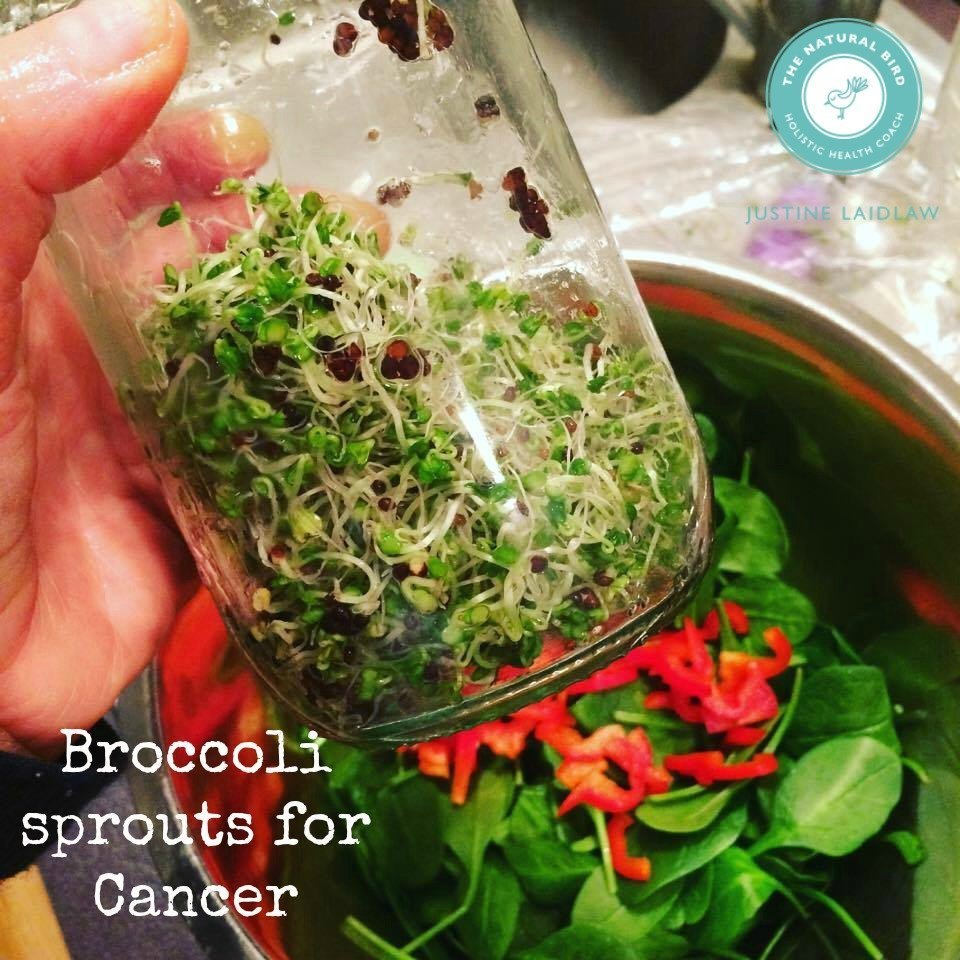 Eating Broccoli sprouts for CANCER